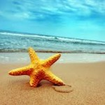 Starfish Travel Agency